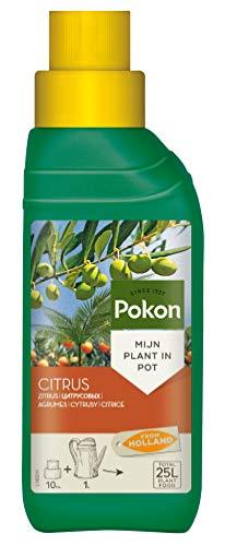 Pokon Zitrus- und Mediterraner Pflanzendünger, Spezial Flüssigdünger, für...