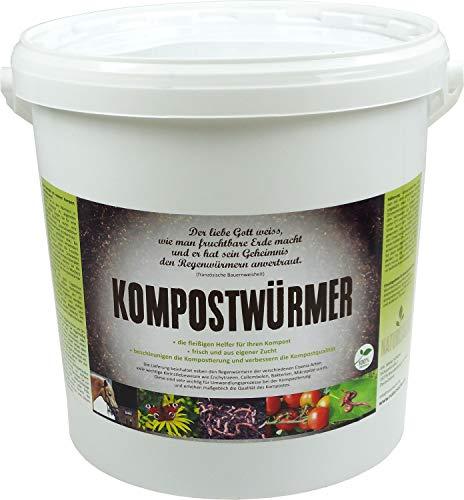 KOMPOSTWÜRMER | natursache.de | Regenwürmer lebend kaufen - effektive...