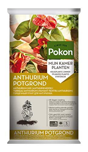 Pokon Anthurien-Erde, Für Flamingoblumen und Farne Kulturstubstrat mit 8 Wochen...