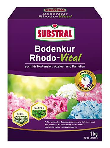 Substral Bodenkur Rhodo-Vital - 1 kg