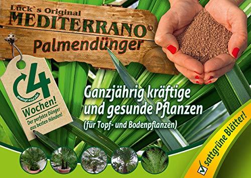 Palmendünger, Hanfpalmendünger,Trachycarpus fortunei düngen,Trachy...