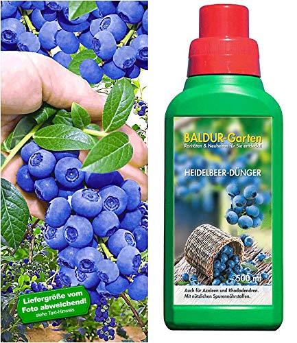 Heidelbeere'Reka® Blue'& Dünger,1 Set